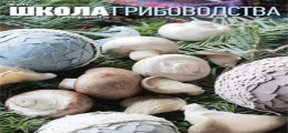 Дни Российского Грибоводства - 2016